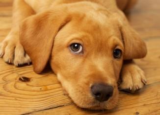 Psicologia animale: i cani hanno la coscienza?