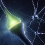 Come viaggiano le informazioni nel nostro cervello?