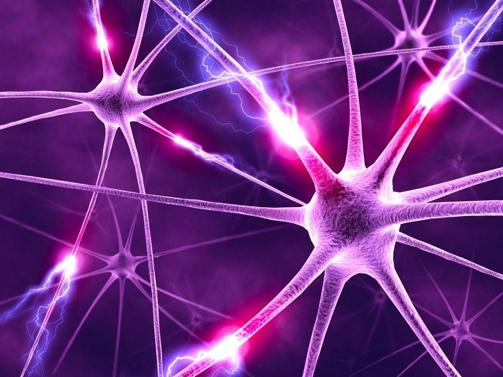 I circuiti neurali dell'ipnosi