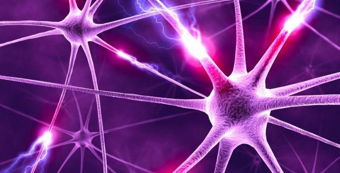Neuroscienze: nuove scoperte sul comportamento abituale e il Disturbo Ossessivo-Compulsivo
