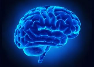 Neuroscienze: nuove scoperte sulle basi neurali della lettura