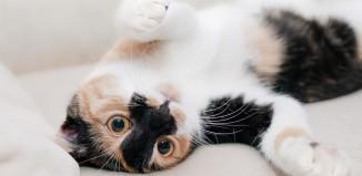 Gatti, emozioni ed intelligenza emotiva