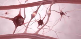 Realizzata la sinapsi artificiale