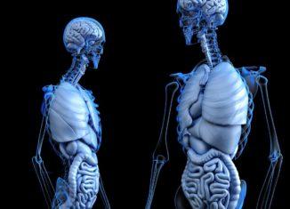 intestino, il nostro secondo cervello